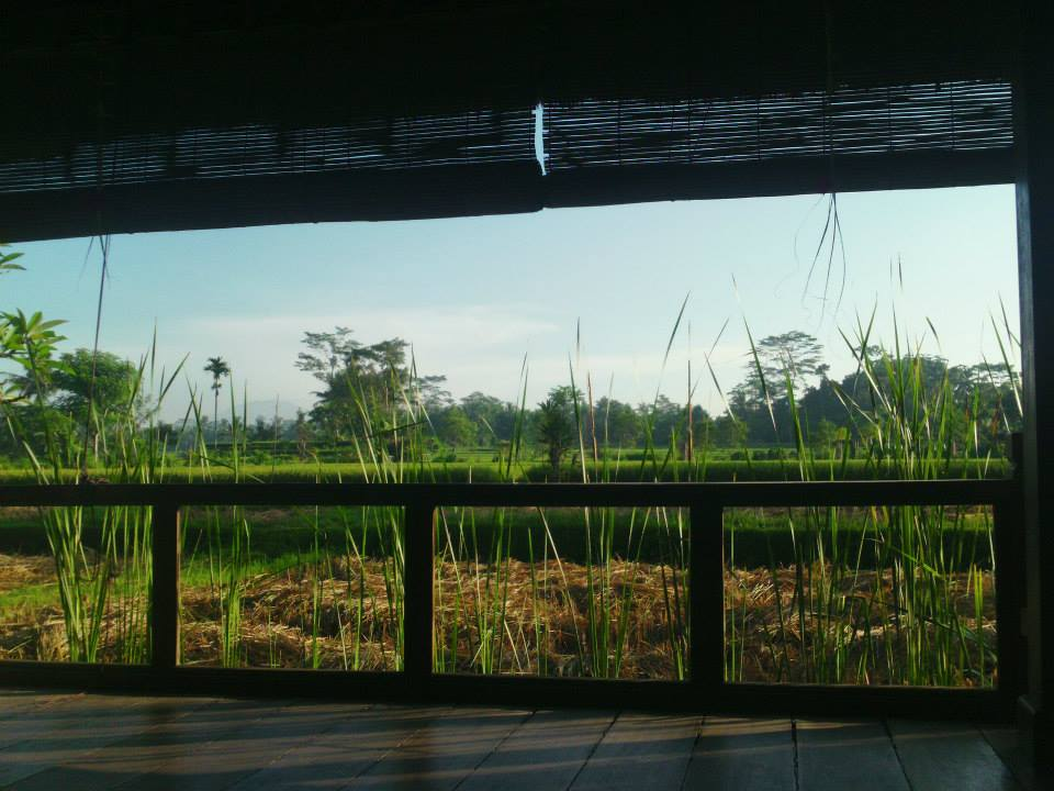 Yoga Retreat Bali Yoga Studio Rice Paddy View