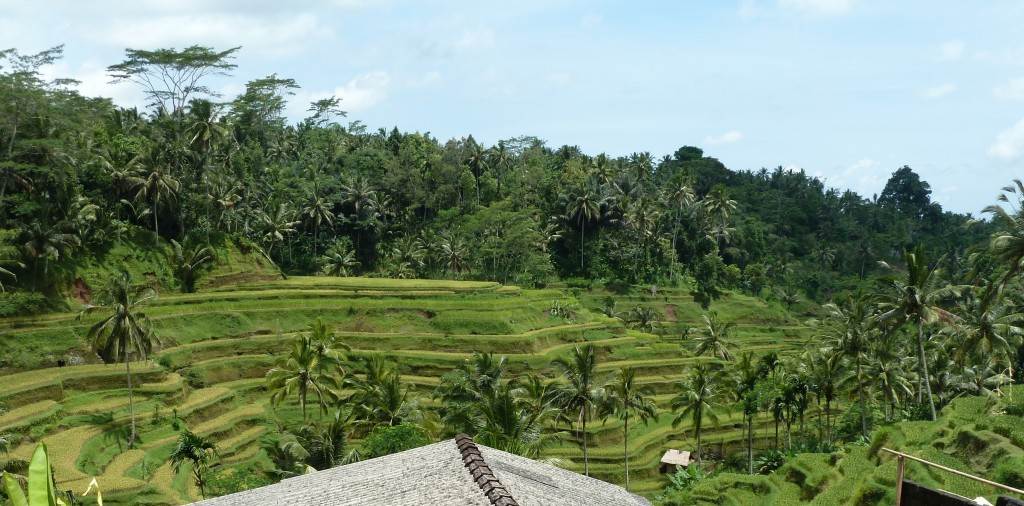 Landscape of yoga retreat in Bali