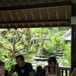 Beautiful Views at Restaurant for Yoga Retreat Bali