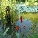 Pond at Ananda