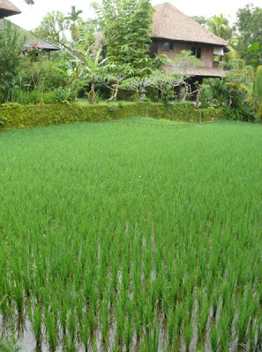 Ananda cottages for the yoga retreat in bali