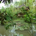 why go to a yoga retreat in ubud bali
