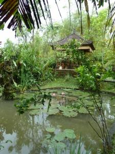 why go to a yoga retreat in ubud bali