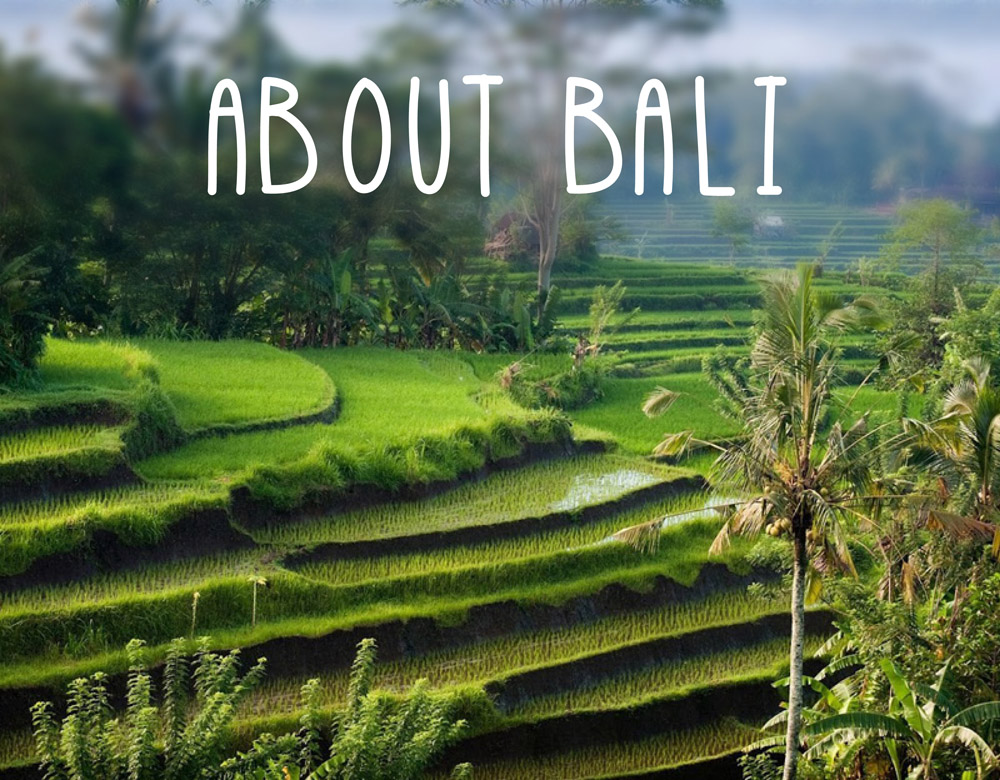 aboutbali-01