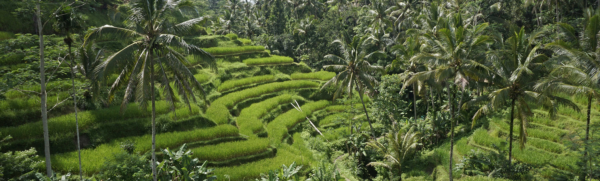 Culture & Spirit Yoga Retreat: Ubud, Bali